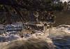 5-11 Tahoe_N5A1971
