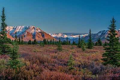 Stunning View in Denali Wilderness Denali National Park Alaska © 2014  TNWA Photography / Debbie Tubridy