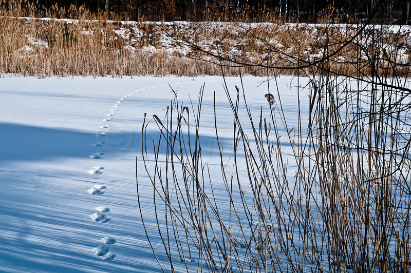 Tracks across the pond.