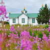 Russian Orthodox Church and Fireweeds in Ninilchik, Alaska