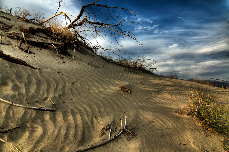 Desert Wildlife Preserve, California