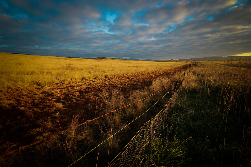 Barbed wire and golden grass