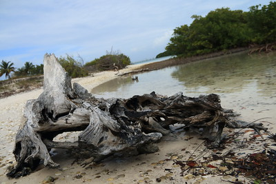 Seaside Driftwood