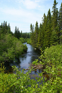 Kagoot Brook flows under a logging road near the base of Mount Mitchell.  This brook was teeming with brook trout, which on several occasions our research team feasted on to break up the monotony of standard camping fare.  Photo taken 19 June 2010.