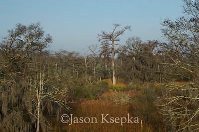 Cypress Swamp-Meadow; Interstate 95, Florida  2008-12-25 8