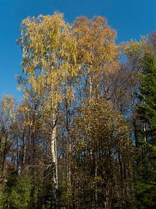 Autumn height