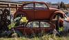 3-29-21 VW Graveyard-9825