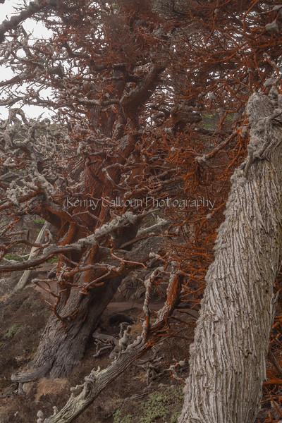 Point Lobos _N5A8344