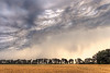 Storm Over the Stubble