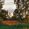 Landscape :golden sunset ligth illuminating flowers, trees and plants