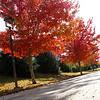 JPG-DLS-IMG_1132-Nov2010-misc