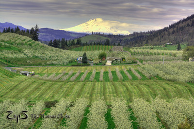 Mt Adams / Oregon