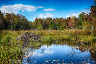 Early Autumn Beaver Bog