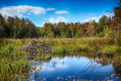 Early Autumn Beaver Bog