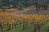 Napa_and_Sonoma_RainNovember_16,_20121N5A6566untitled