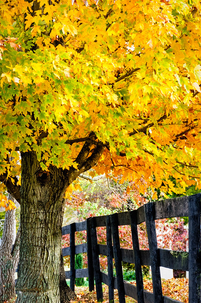 Fall colors, Fauquier County, Virginia