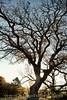 Fall Tree_2O7A3006_v2