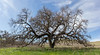 Bruces Oak Valley--4