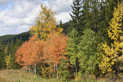 Nature's fall palette, Kananaskis Country, Alberta. September, 2009.