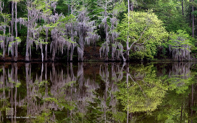Reflections of Caddo Lake.