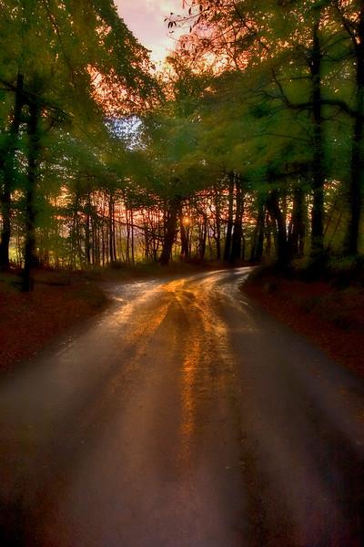 In the dark wood...