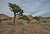 Joshua Tree National Park, California 2011