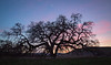 Bruce's Oak Sunset 2-17-20-2494