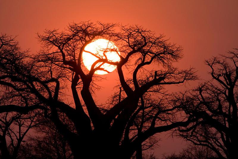 Africa, Africa 2008, Baines Baobab, Baobab, Botswana, Chris Collard, Kalahari, Landscape, Makgadikgadi pan Copyright Chris Collard - All rights reserved