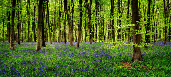Ancient Woods - Winchester