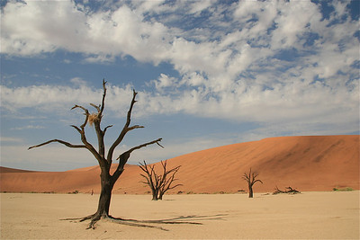 Deadvlei, Namib Naukluft, Namibië.