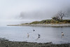 Foggy day at Esquimalt Lagoon