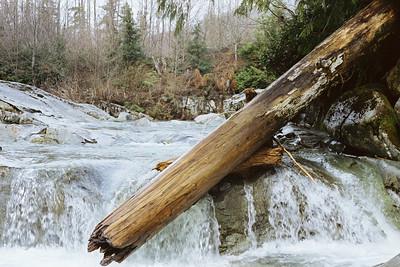 Fallen Log, Vancouver Island