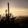 Saguaro at Sunset in Grey