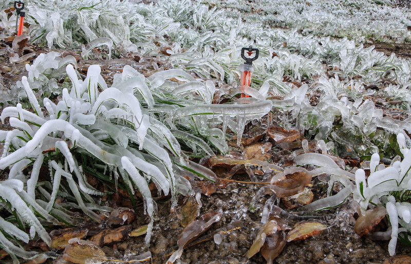 Harrison Ice Orchard _N5A3755-2