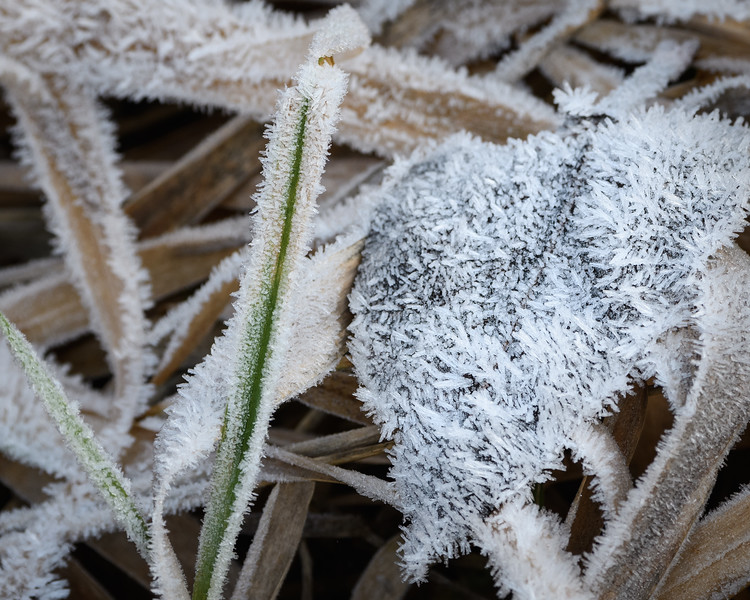 Frosty morning at Rithet's Bog