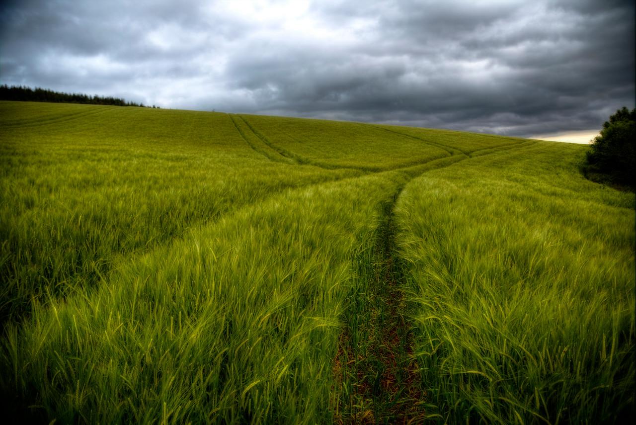Barley Green