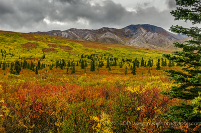 Autumn Arrives at Denali Denali National Park Alaska © 2014