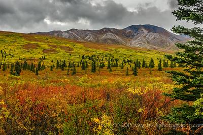 Autumn Arrives at Denali Denali National Park Alaska © 2014