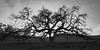 Bruce's Oak Sunset 2-17-20--3