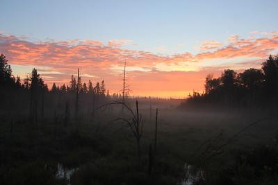 Sunrise In Maine Over Bog