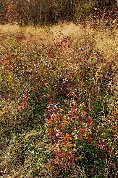 Fall field, Blackwater National Wildlife Refuge, Maryland