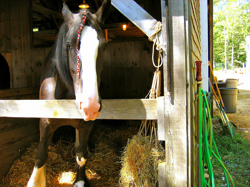 Horse at the Fair
