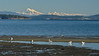 Island View Beach and Mount Baker