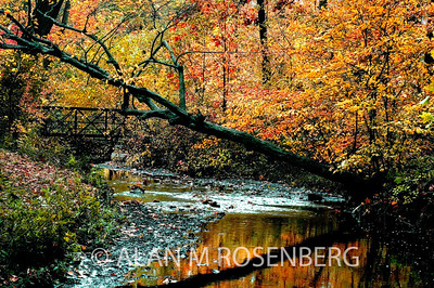Roosevelt Park Fall 2007