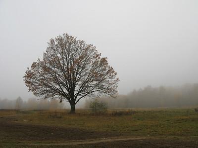 Autumn foggy day