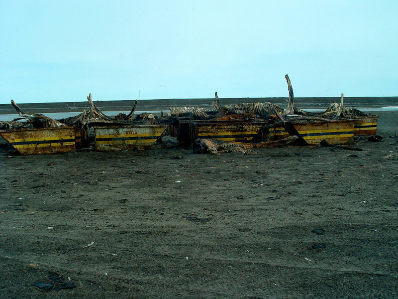 This shot is seems unusual but makes sence once you understand the culture of Point Barrow, Alaska.  It is of the remnents of the previous whale hunt which everyone shares a piece of the catch.  Sort of a religious thing for the locals.  This is left well outside town to give the polar bears something to eat besides the local people.  I am not kidding!