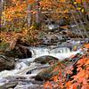 Sandy River Foliage