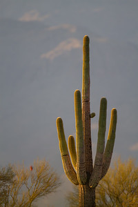 Desert Vista - Tucson, AZ, USA