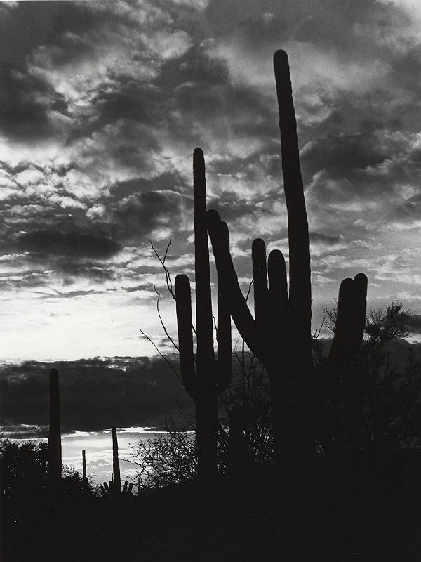 """Saguaro Sunset""<br /> Arizona, Saguaro National Park"