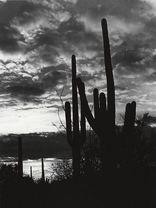 """Saguaro Sunset"" Arizona, Saguaro National Park"